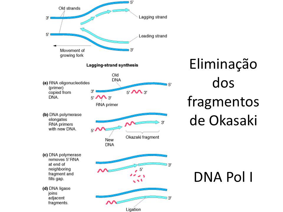 Eliminação dos fragmentos de Okasaki DNA Pol I