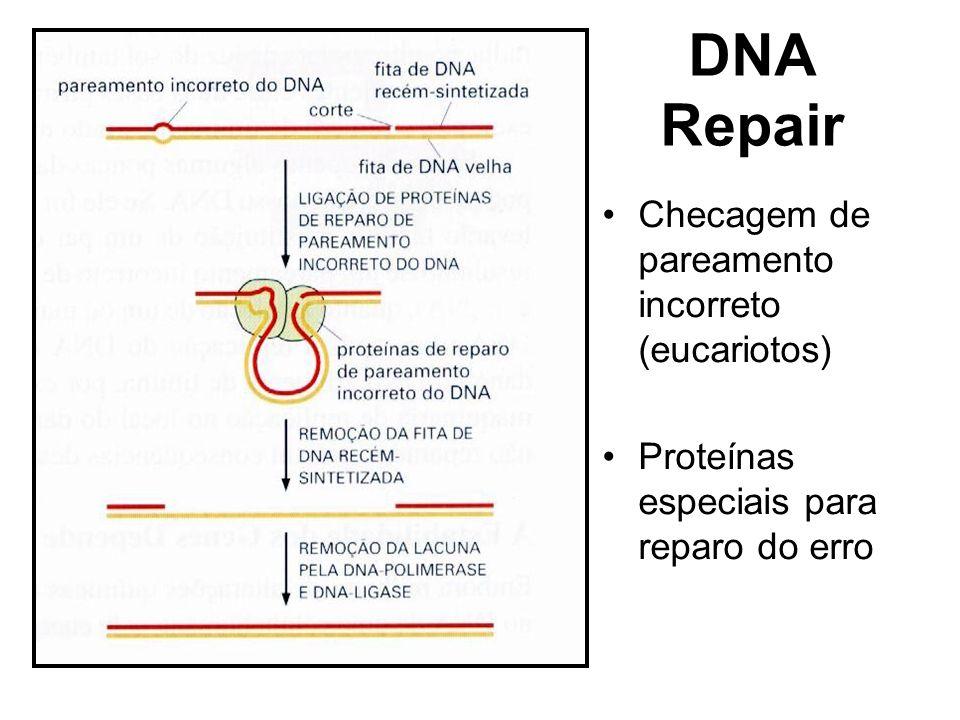 DNA Repair Checagem de pareamento incorreto (eucariotos) Proteínas especiais para reparo do erro