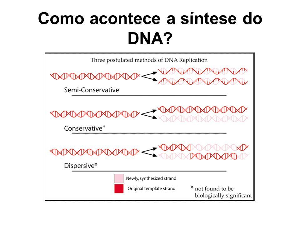 Como acontece a síntese do DNA?