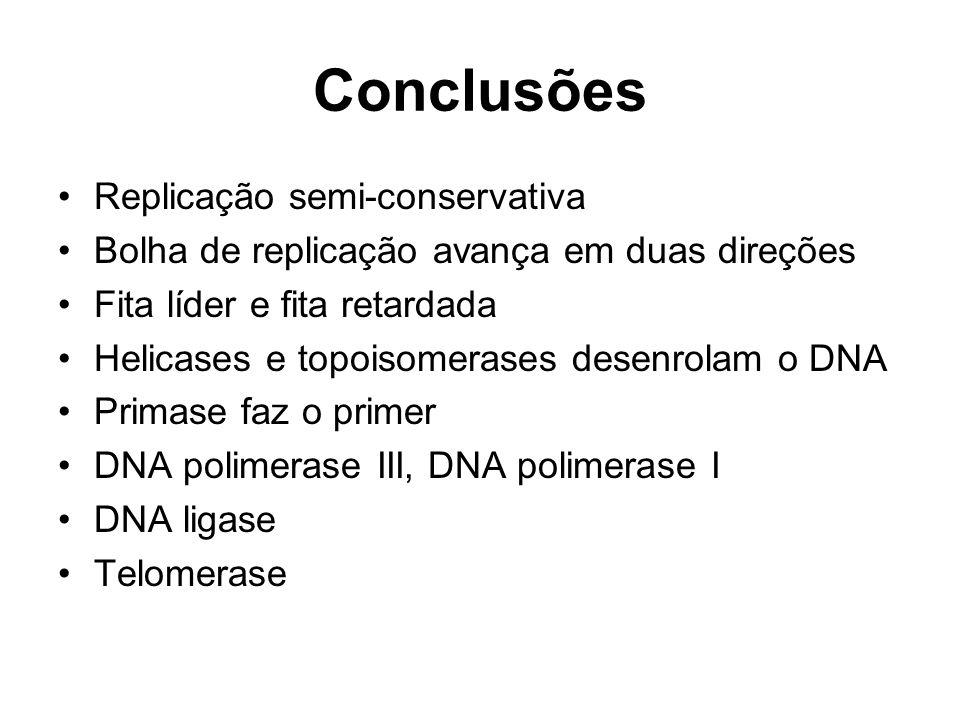 Conclusões Replicação semi-conservativa Bolha de replicação avança em duas direções Fita líder e fita retardada Helicases e topoisomerases desenrolam o DNA Primase faz o primer DNA polimerase III, DNA polimerase I DNA ligase Telomerase