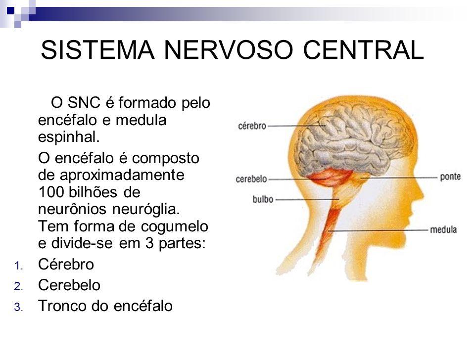 SISTEMA NERVOSO CENTRAL O SNC é formado pelo encéfalo e medula espinhal. O encéfalo é composto de aproximadamente 100 bilhões de neurônios neuróglia.