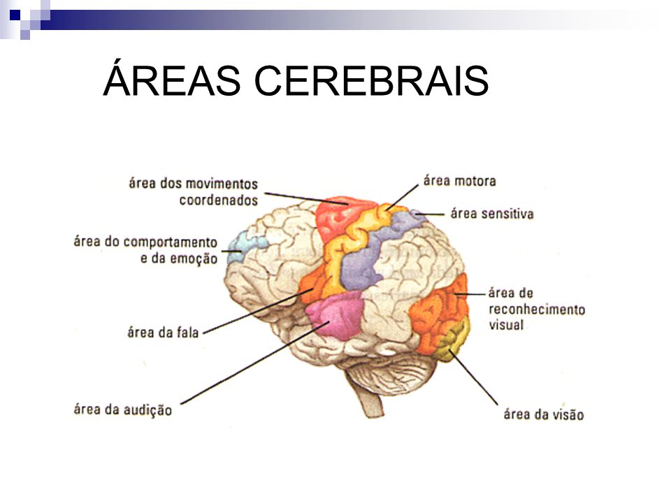 ÁREAS CEREBRAIS