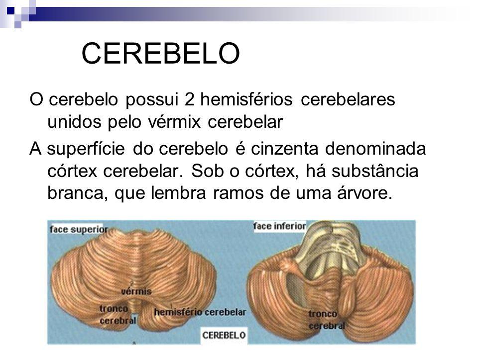 CEREBELO O cerebelo possui 2 hemisférios cerebelares unidos pelo vérmix cerebelar A superfície do cerebelo é cinzenta denominada córtex cerebelar. Sob