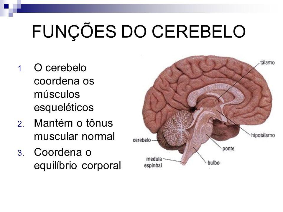 FUNÇÕES DO CEREBELO 1. O cerebelo coordena os músculos esqueléticos 2. Mantém o tônus muscular normal 3. Coordena o equilíbrio corporal