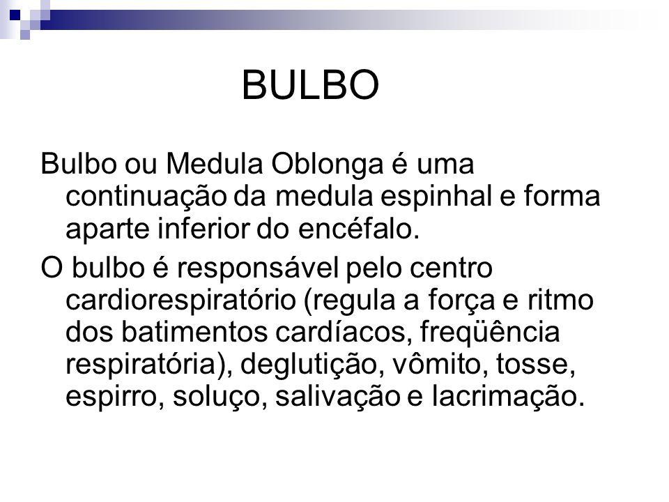 BULBO Bulbo ou Medula Oblonga é uma continuação da medula espinhal e forma aparte inferior do encéfalo. O bulbo é responsável pelo centro cardiorespir