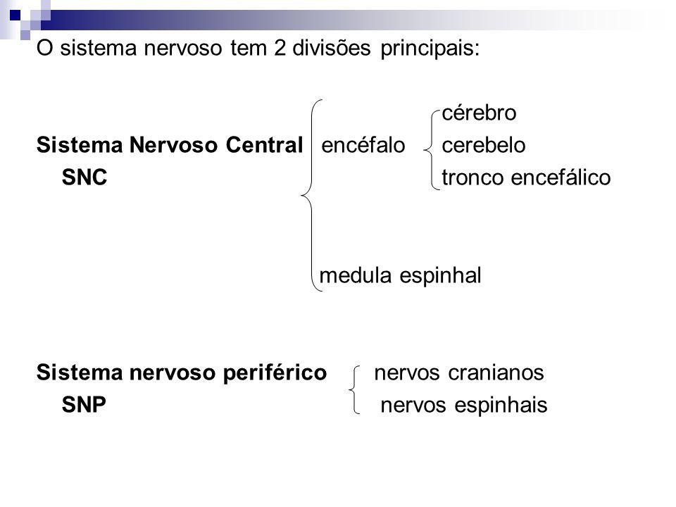 O sistema nervoso tem 2 divisões principais: cérebro Sistema Nervoso Central encéfalocerebelo SNCtronco encefálico medula espinhal Sistema nervoso per