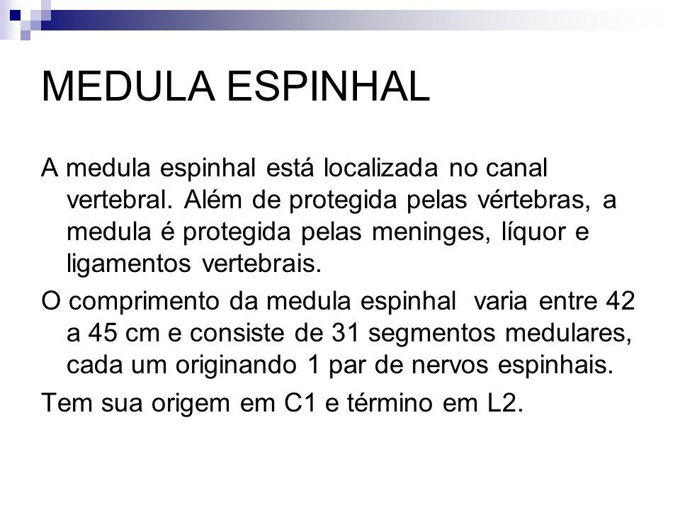 MEDULA ESPINHAL A medula espinhal está localizada no canal vertebral. Além de protegida pelas vértebras, a medula é protegida pelas meninges, líquor e