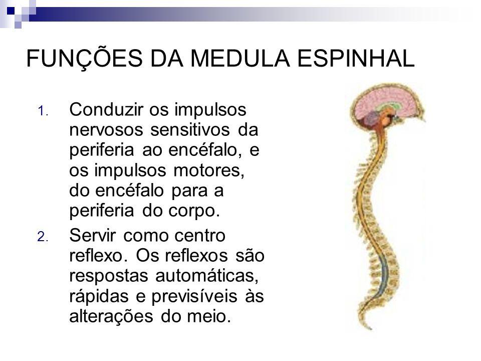 FUNÇÕES DA MEDULA ESPINHAL 1. Conduzir os impulsos nervosos sensitivos da periferia ao encéfalo, e os impulsos motores, do encéfalo para a periferia d