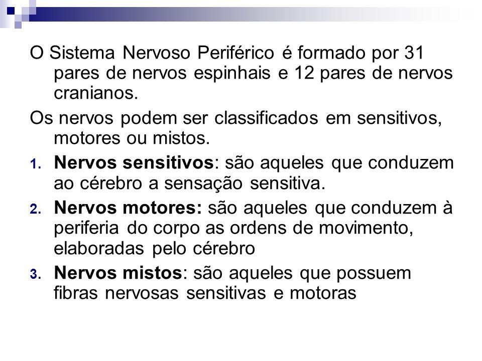 O Sistema Nervoso Periférico é formado por 31 pares de nervos espinhais e 12 pares de nervos cranianos. Os nervos podem ser classificados em sensitivo