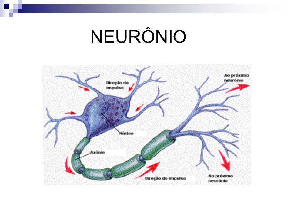 SINAPSES As sinapses são articulações terminais estabelecidas entre: 1.
