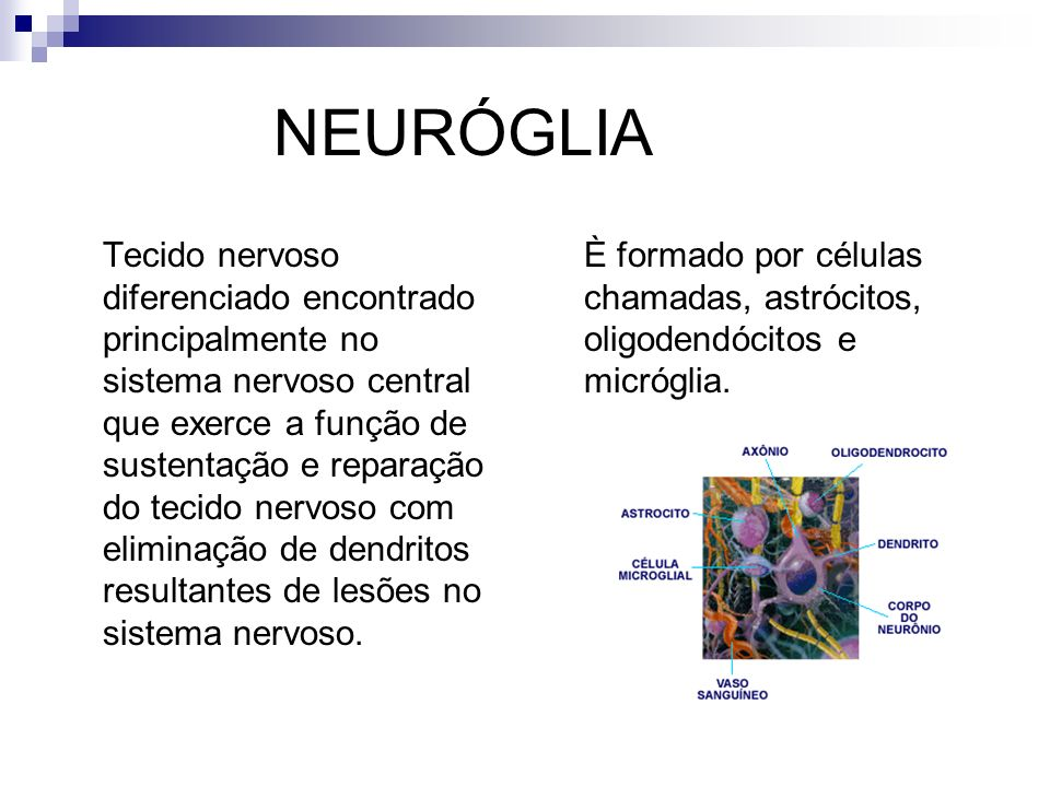 NEURÓGLIA Tecido nervoso diferenciado encontrado principalmente no sistema nervoso central que exerce a função de sustentação e reparação do tecido ne