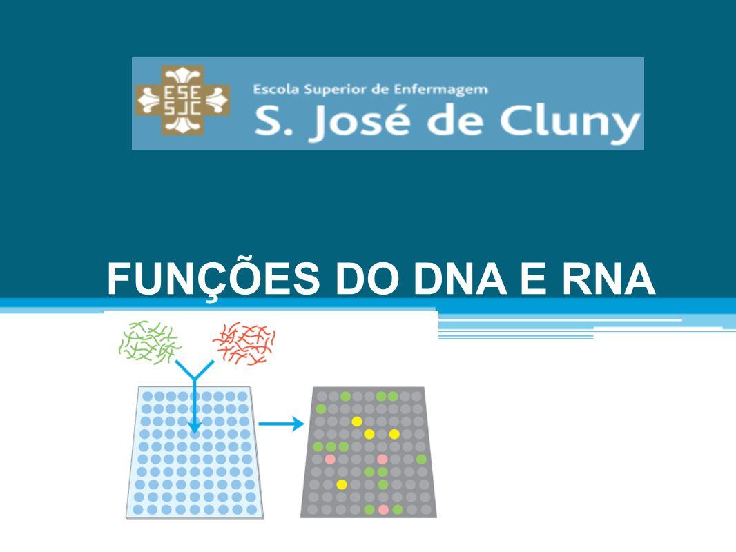 O DNA NO NÚCLEO A soma total de todo o DNA num organismo é chamado de genoma.