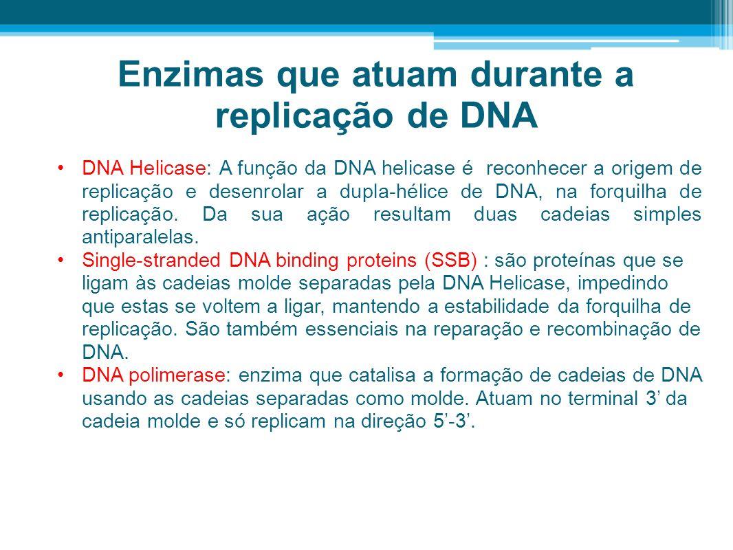 Enzimas que atuam durante a replicação de DNA DNA Helicase: A função da DNA helicase é reconhecer a origem de replicação e desenrolar a dupla-hélice d