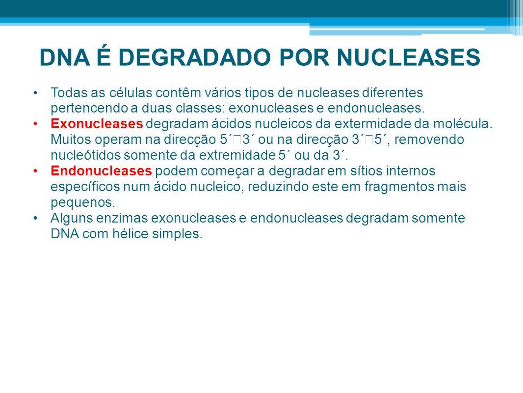 DNA É DEGRADADO POR NUCLEASES Todas as células contêm vários tipos de nucleases diferentes pertencendo a duas classes: exonucleases e endonucleases. E