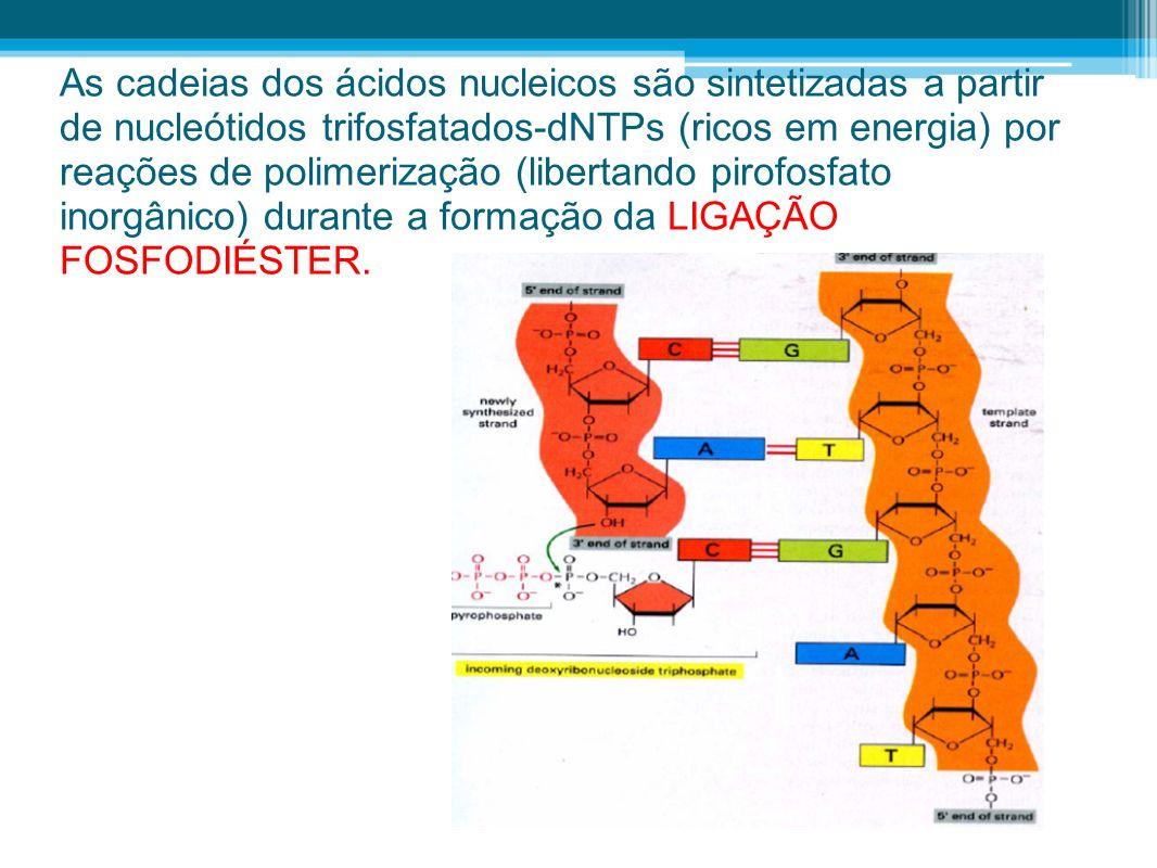 As cadeias dos ácidos nucleicos são sintetizadas a partir de nucleótidos trifosfatados-dNTPs (ricos em energia) por reações de polimerização (libertan