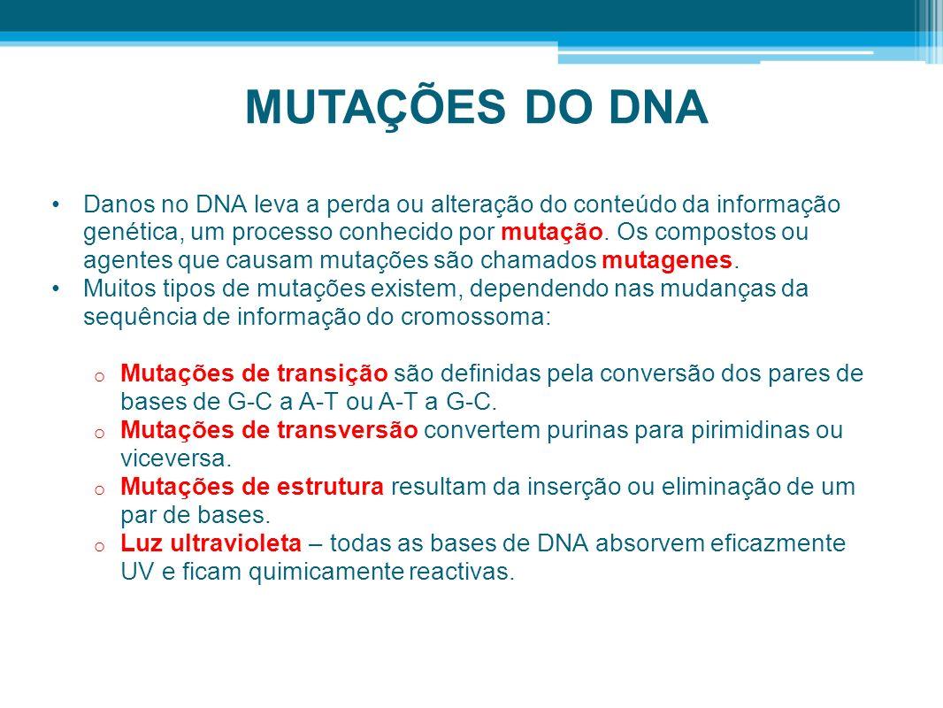MUTAÇÕES DO DNA Danos no DNA leva a perda ou alteração do conteúdo da informação genética, um processo conhecido por mutação. Os compostos ou agentes