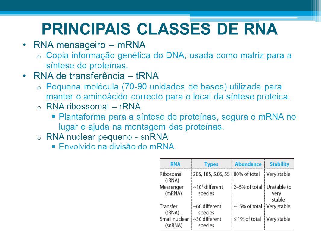 PRINCIPAIS CLASSES DE RNA RNA mensageiro – mRNA o Copia informação genética do DNA, usada como matriz para a síntese de proteínas. RNA de transferênci