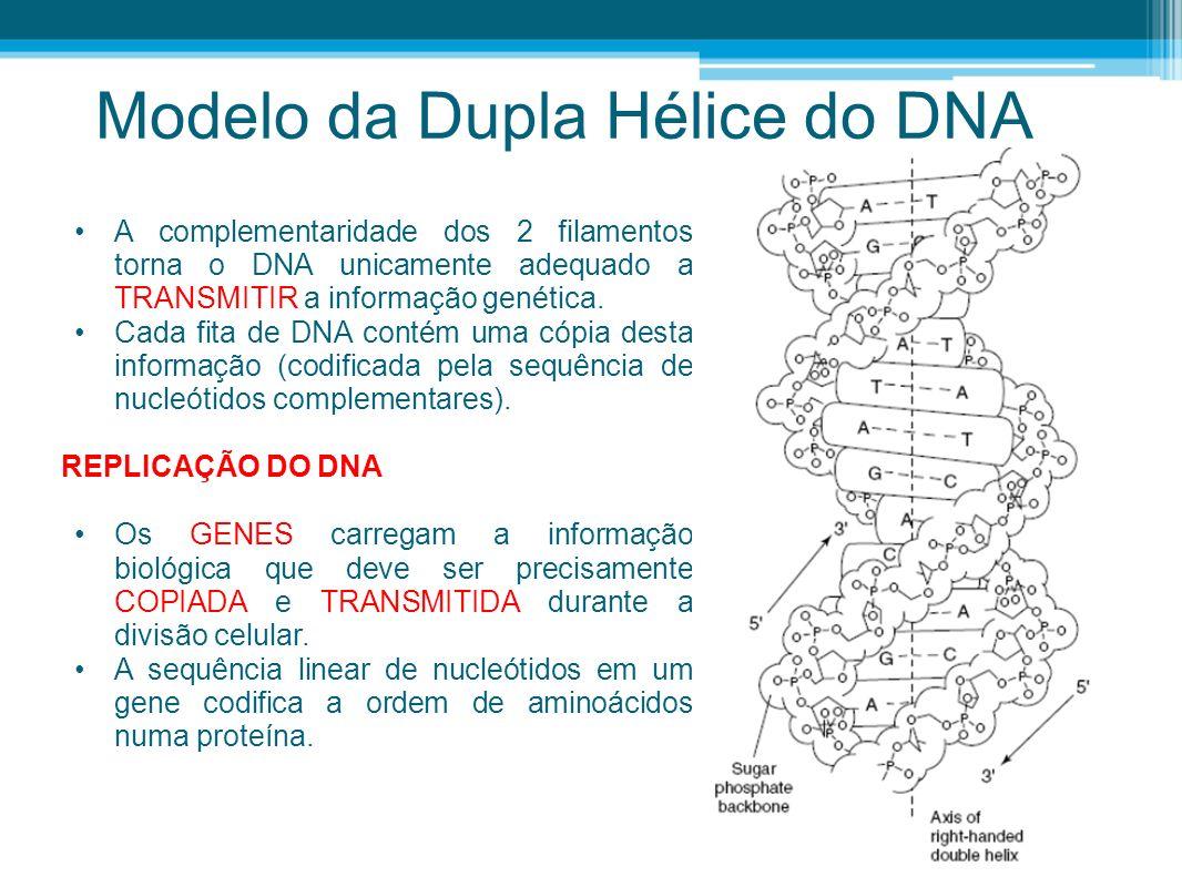 RNA É SINTETIZADO POR RNA- POLIMERASES Os RNAPs desempenham todas as atividades necessárias para a transcrição: 1) reconhecem e ligam-se a sequências específicas de DNA; 2) desnaturam o DNA, expondo a sequência de nucleótidos a ser copiada; 3) mantêm as fitas de DNA separadas na região de síntese; 4) mantêm estável o duplex DNA:RNA na região de síntese; 5) restauram o DNA na região imediatamente posterior à da síntese; 6) sozinhas ou com auxílio de proteínas específicas, terminam a síntese do RNA.