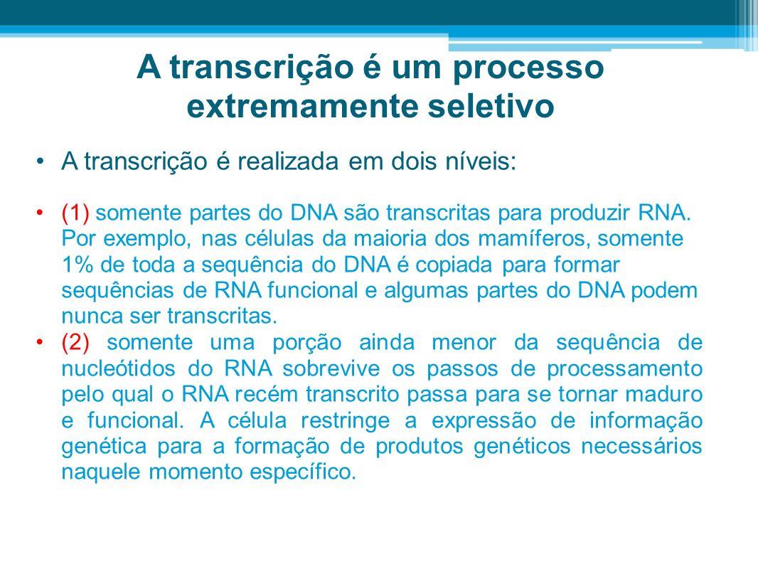 A transcrição é um processo extremamente seletivo A transcrição é realizada em dois níveis: (1) somente partes do DNA são transcritas para produzir RN