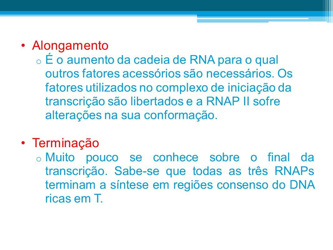 Alongamento o É o aumento da cadeia de RNA para o qual outros fatores acessórios são necessários. Os fatores utilizados no complexo de iniciação da tr