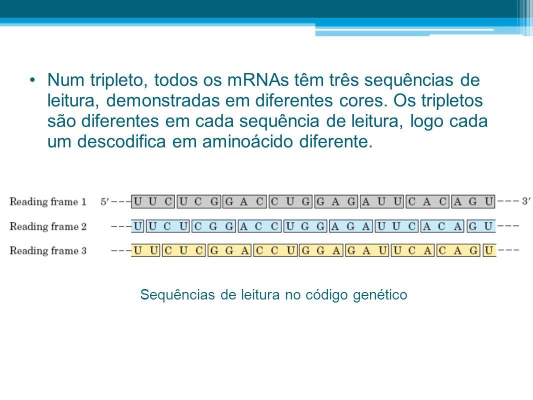 Num tripleto, todos os mRNAs têm três sequências de leitura, demonstradas em diferentes cores. Os tripletos são diferentes em cada sequência de leitur