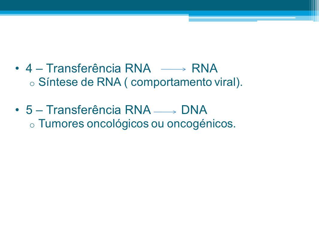 4 – Transferência RNA RNA o Síntese de RNA ( comportamento viral). 5 – Transferência RNA DNA o Tumores oncológicos ou oncogénicos.