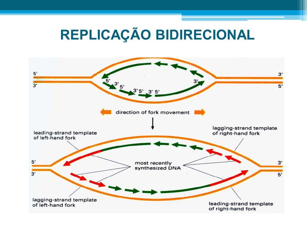 Enzimas que atuam durante a replicação de DNA DNA Helicase: A função da DNA helicase é reconhecer a origem de replicação e desenrolar a dupla-hélice de DNA, na forquilha de replicação.
