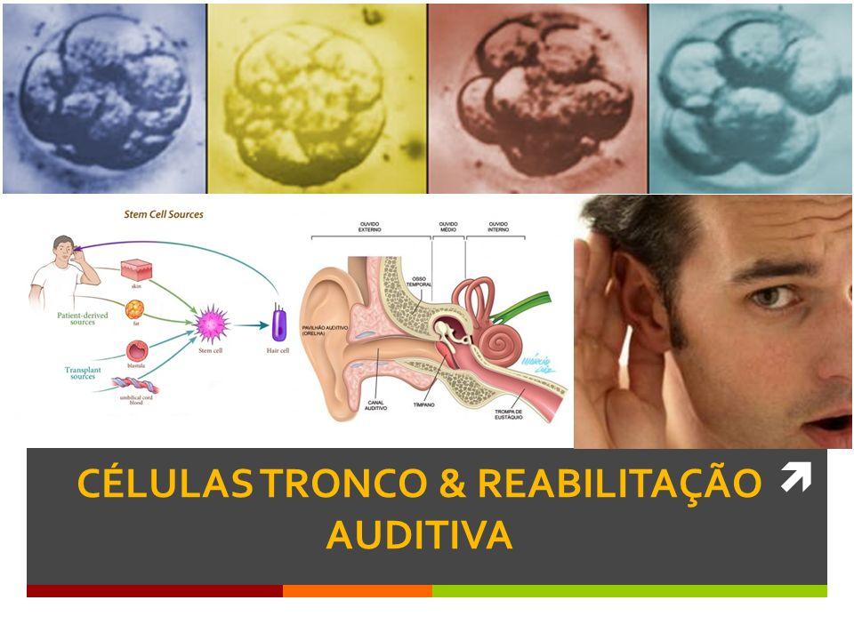 Outra direção de pesquisa: como as células ciliadas se comunicam com o SNC (sinapses) NIVEL MOLECULAR CÉLULAS TRONCO & REABILITAÇÃO AUDITIVA Stanford School of Medicine 2012 DR.