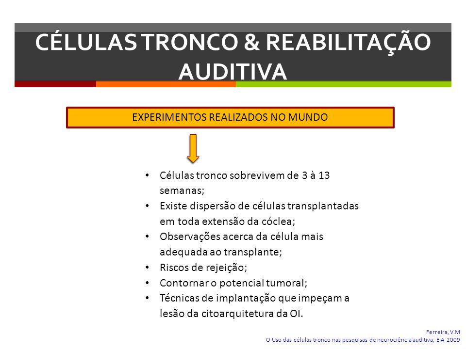 CÉLULAS TRONCO & REABILITAÇÃO AUDITIVA Ferreira, V.M O Uso das células tronco nas pesquisas de neurociência auditiva, EIA 2009 EXPERIMENTOS REALIZADOS