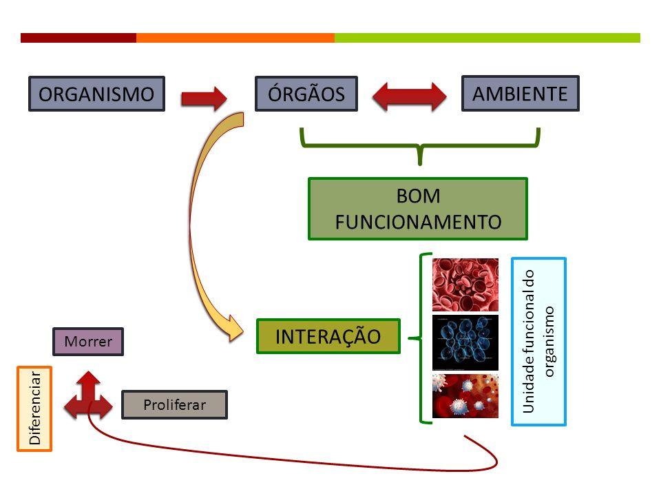 Morrer Diferenciar Proliferar Unidade funcional do organismo INTERAÇÃO BOM FUNCIONAMENTO AMBIENTE ÓRGÃOSORGANISMO