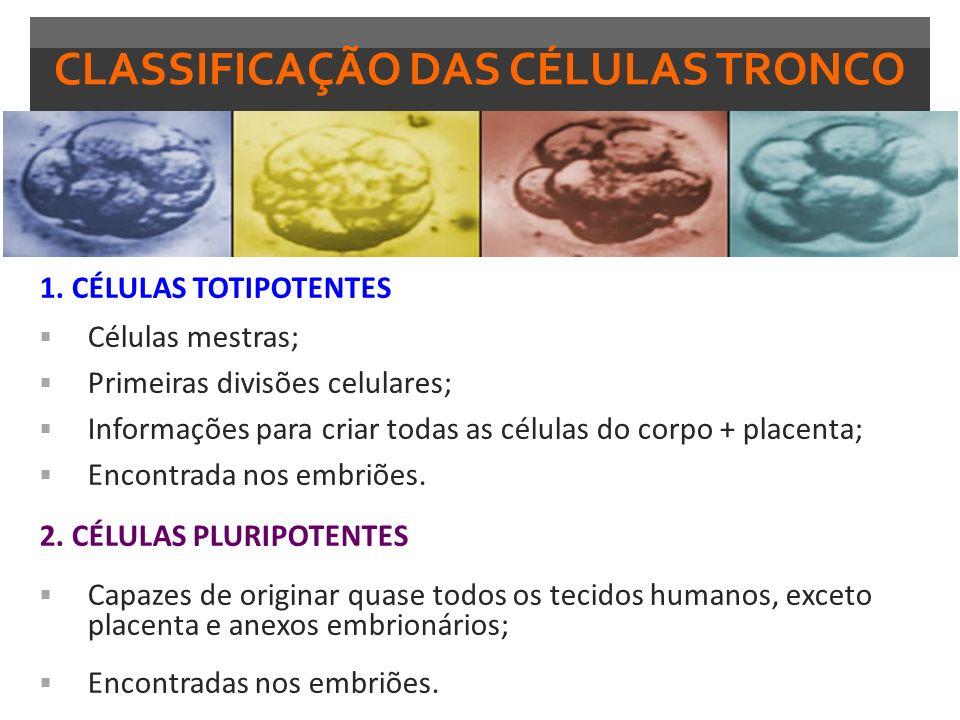 CLASSIFICAÇÃO DAS CÉLULAS TRONCO 3.