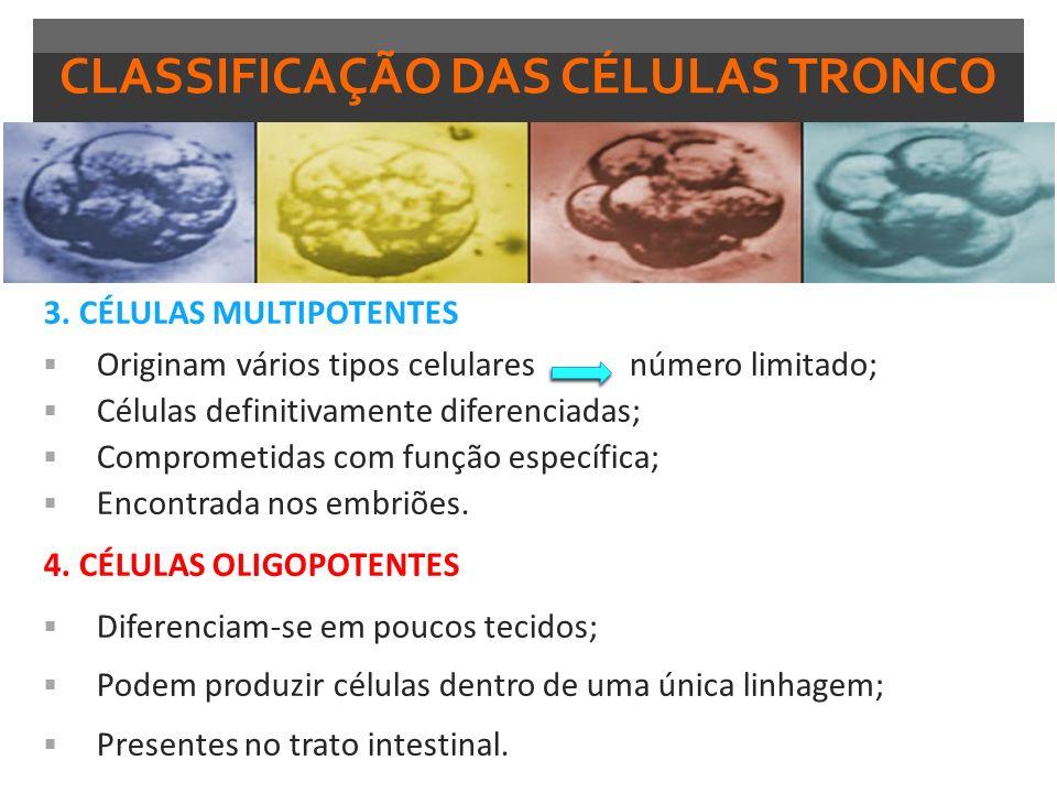 CLASSIFICAÇÃO DAS CÉLULAS TRONCO 3. CÉLULAS MULTIPOTENTES Originam vários tipos celulares número limitado; Células definitivamente diferenciadas; Comp
