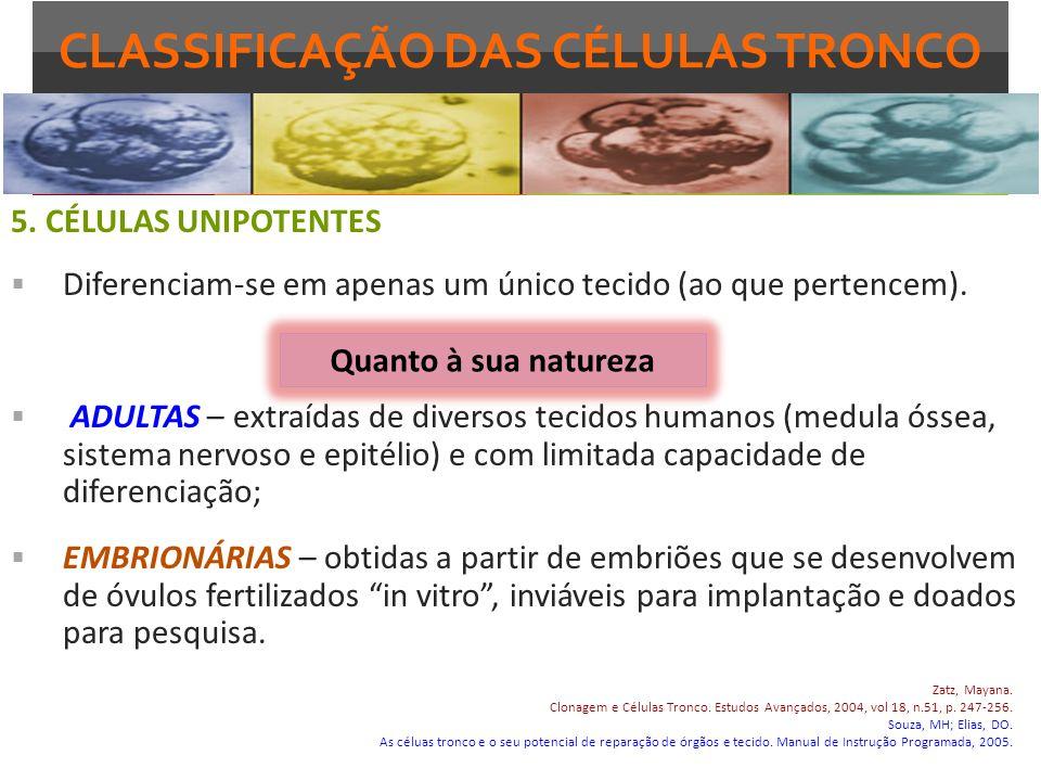 CLASSIFICAÇÃO DAS CÉLULAS TRONCO 5. CÉLULAS UNIPOTENTES Diferenciam-se em apenas um único tecido (ao que pertencem). ADULTAS – extraídas de diversos t