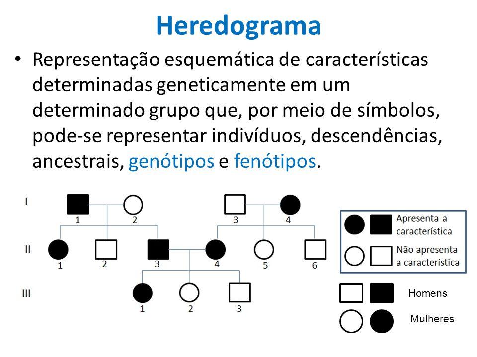 Heredograma Representação esquemática de características determinadas geneticamente em um determinado grupo que, por meio de símbolos, pode-se representar indivíduos, descendências, ancestrais, genótipos e fenótipos.