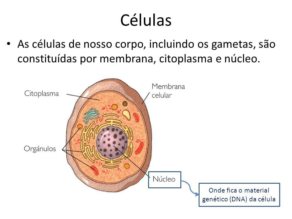 Células As células de nosso corpo, incluindo os gametas, são constituídas por membrana, citoplasma e núcleo.