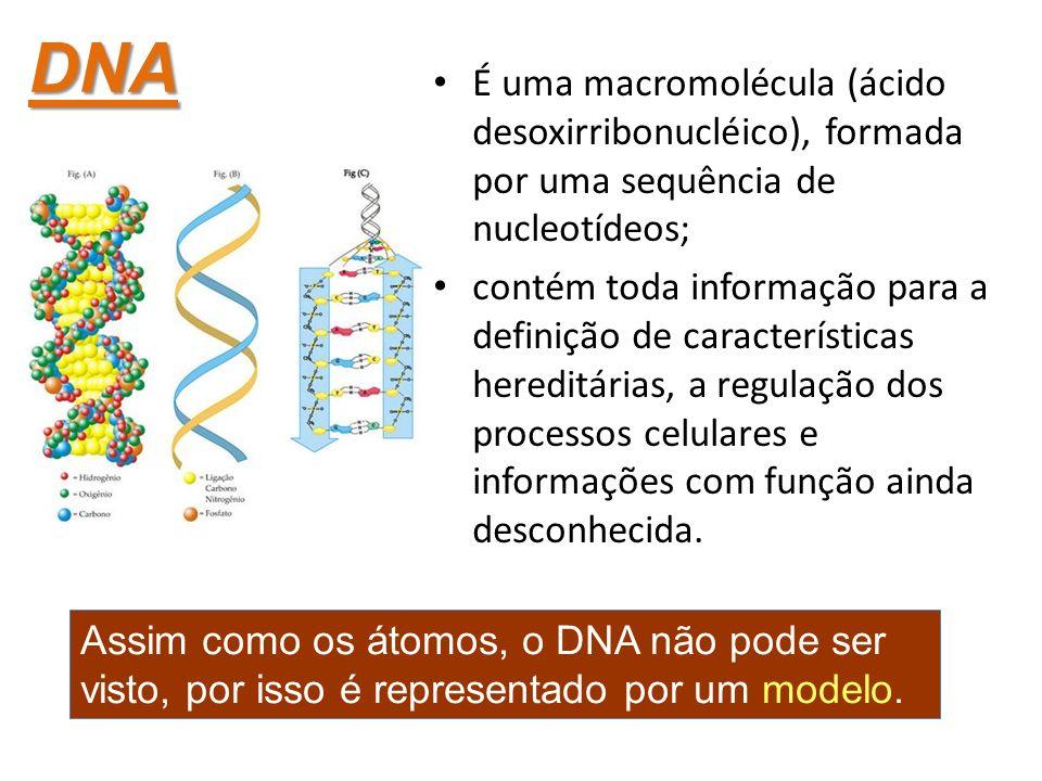 É uma macromolécula (ácido desoxirribonucléico), formada por uma sequência de nucleotídeos; contém toda informação para a definição de características hereditárias, a regulação dos processos celulares e informações com função ainda desconhecida.