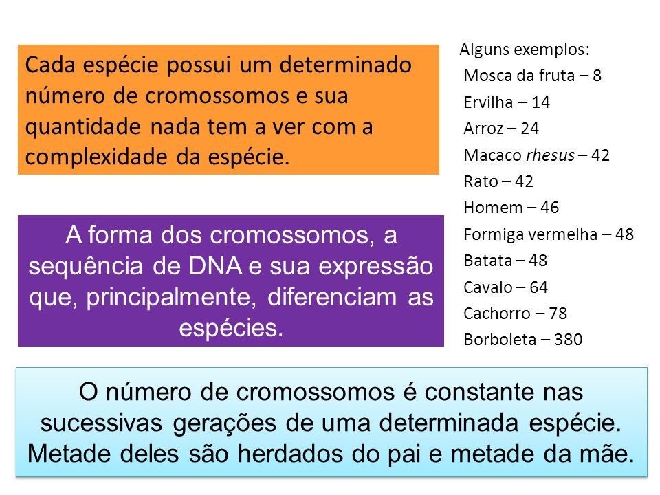 Cada espécie possui um determinado número de cromossomos e sua quantidade nada tem a ver com a complexidade da espécie.
