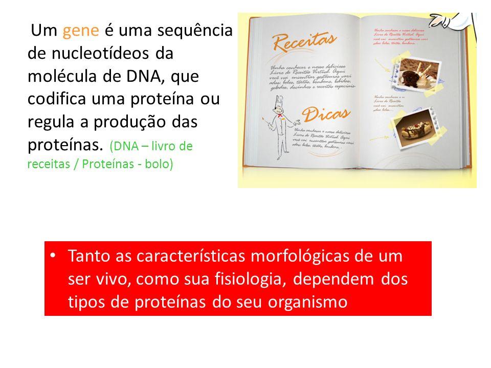 Um gene é uma sequência de nucleotídeos da molécula de DNA, que codifica uma proteína ou regula a produção das proteínas.