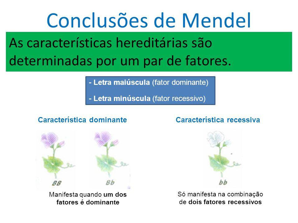 Conclusões de Mendel As características hereditárias são determinadas por um par de fatores.