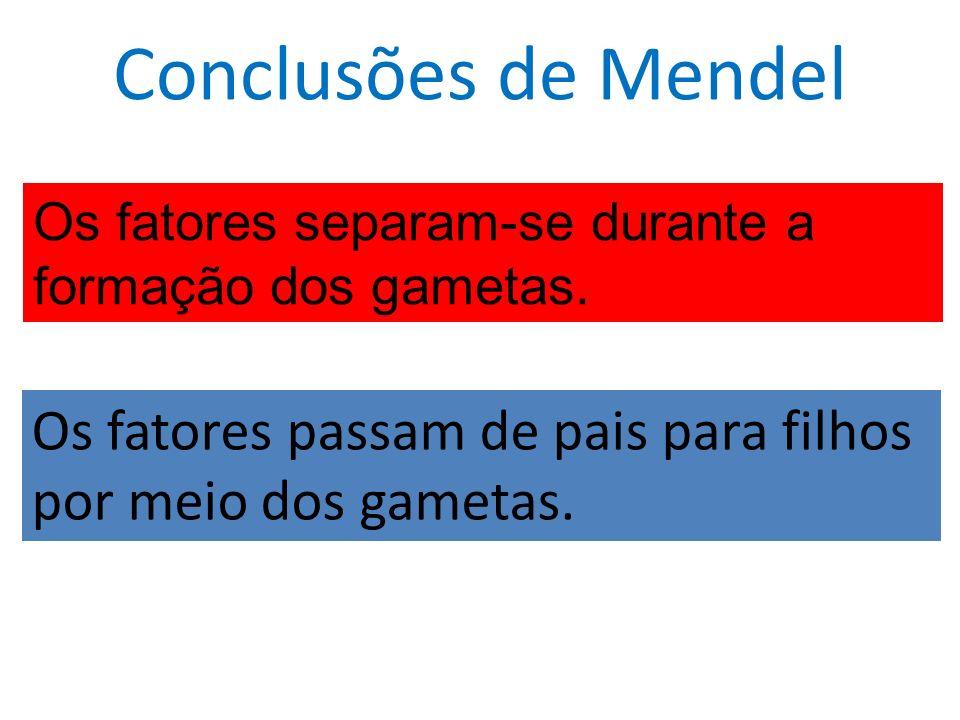 Conclusões de Mendel Os fatores passam de pais para filhos por meio dos gametas.