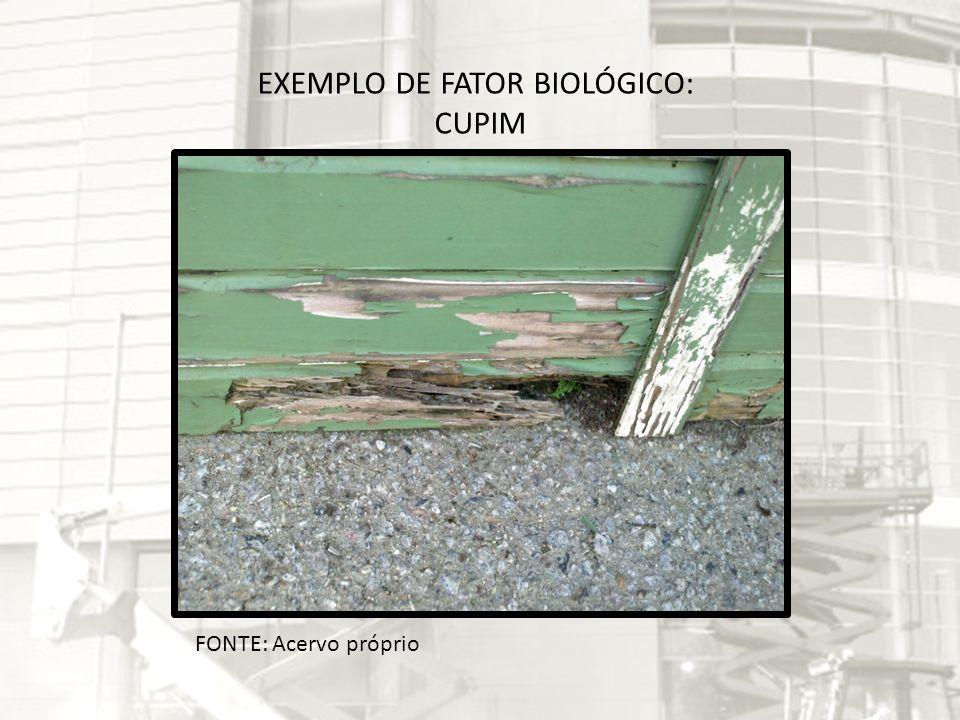 FONTE: Acervo próprio EXEMPLO DE FATOR BIOLÓGICO: CUPIM
