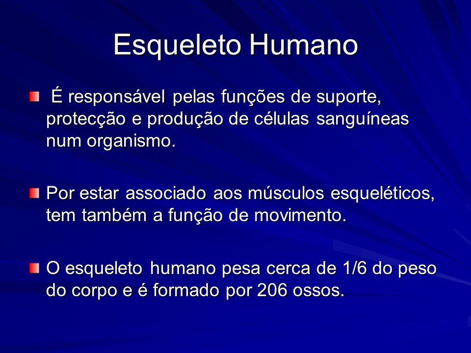 Esqueleto Humano É responsável pelas funções de suporte, protecção e produção de células sanguíneas num organismo. É responsável pelas funções de supo