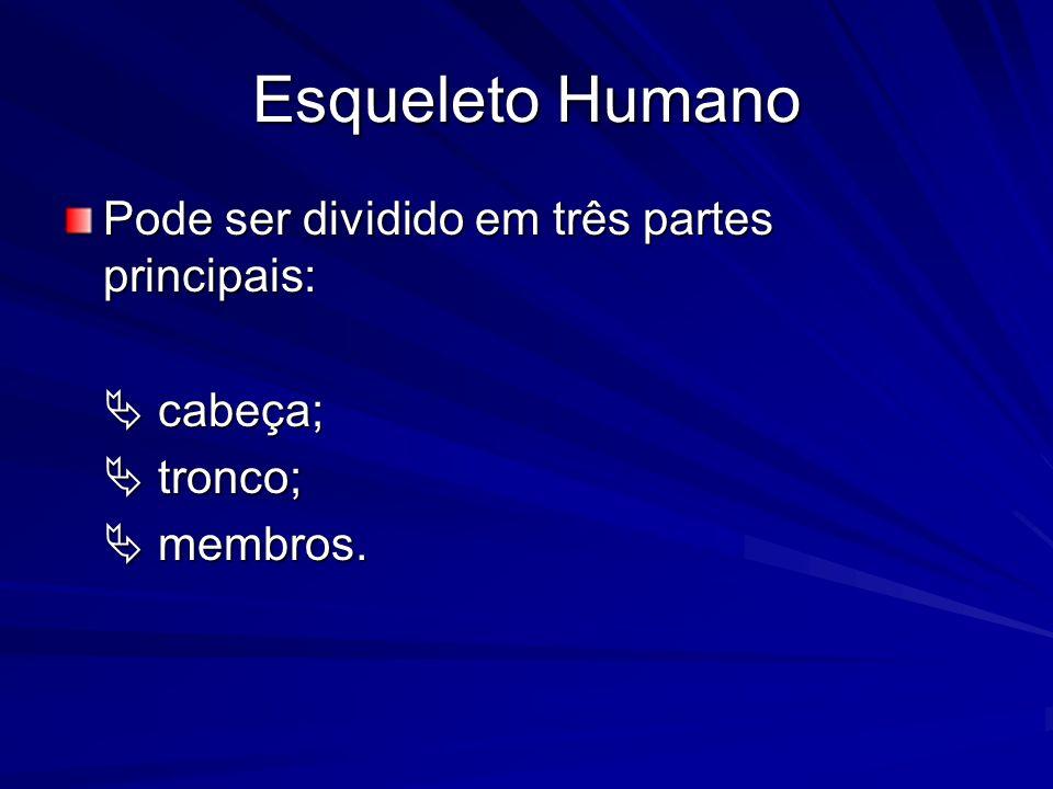 Esqueleto Humano Pode ser dividido em três partes principais: cabeça; cabeça; tronco; tronco; membros. membros.