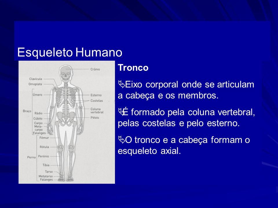 Tronco Eixo corporal onde se articulam a cabeça e os membros. É formado pela coluna vertebral, pelas costelas e pelo esterno. O tronco e a cabeça form