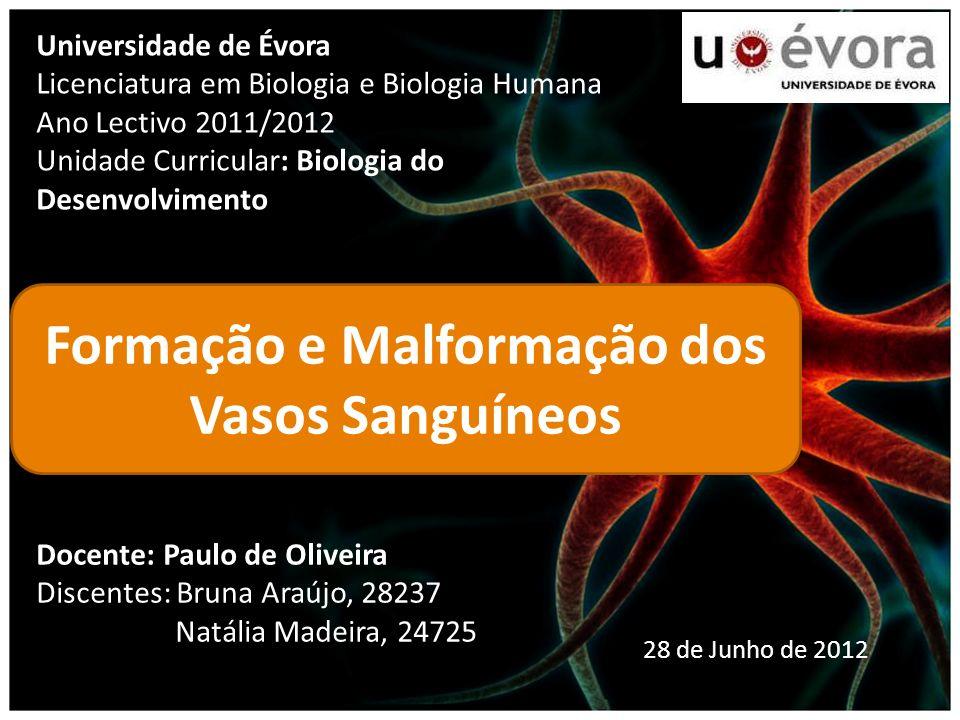 Universidade de Évora Licenciatura em Biologia e Biologia Humana Ano Lectivo 2011/2012 Unidade Curricular: Biologia do Desenvolvimento Formação e Malf