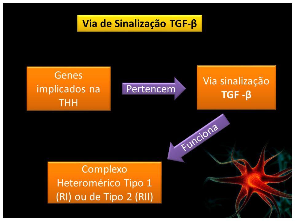 Via de Sinalização TGF-β Genes implicados na THH Via sinalização TGF -β Pertencem Funciona Complexo Heteromérico Tipo 1 (RI) ou de Tipo 2 (RII)