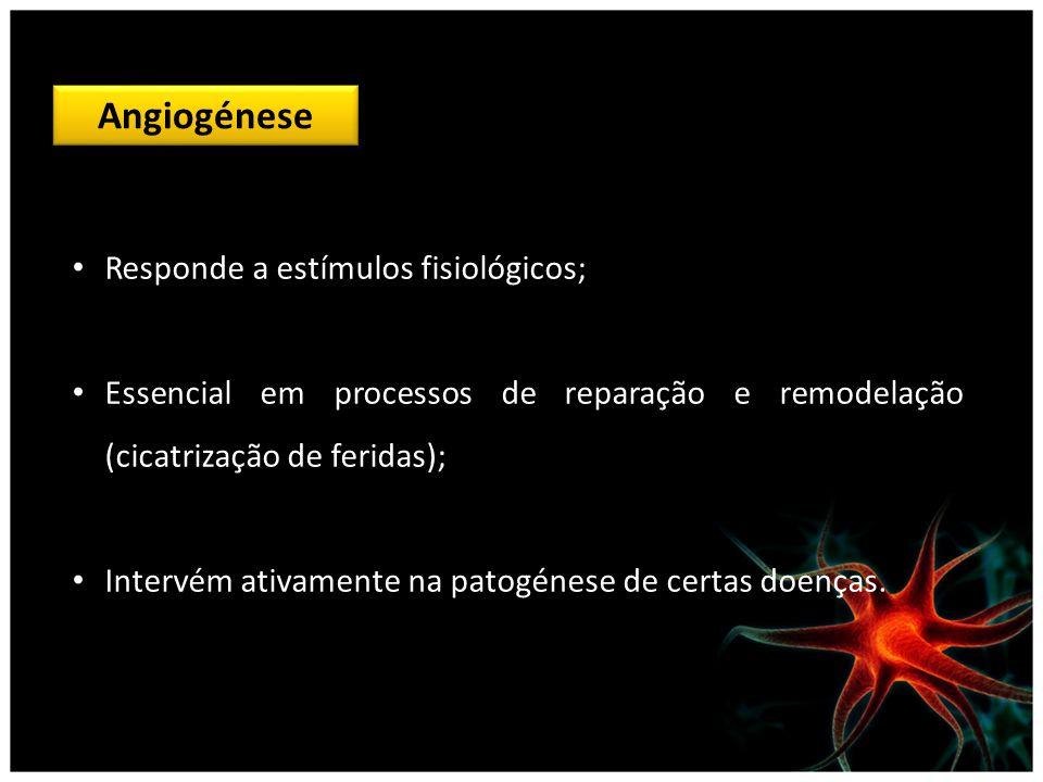 Angiogénese Responde a estímulos fisiológicos; Essencial em processos de reparação e remodelação (cicatrização de feridas); Intervém ativamente na pat