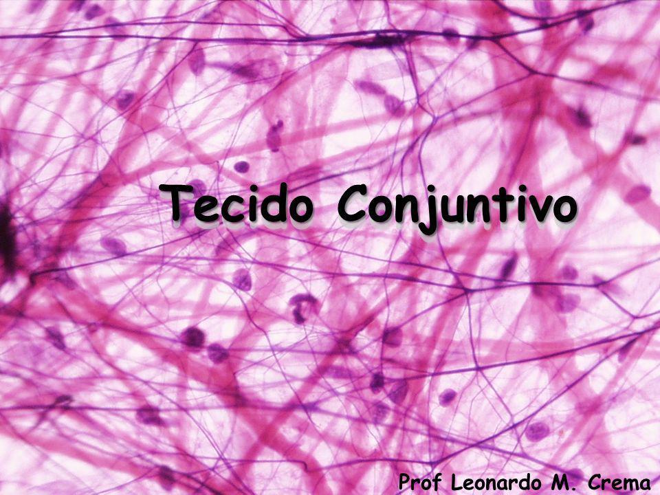 Tec. conj. denso não-modelado Ex. Derme da pele Tec. conj. denso modelado Ex. Tendão