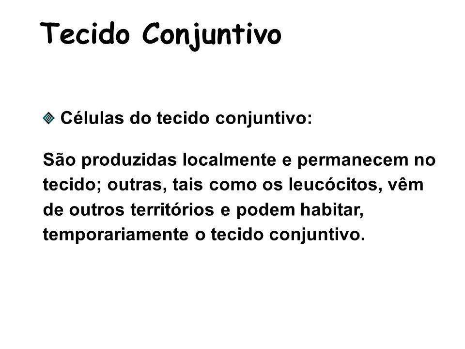 Tecido Conjuntivo Células do tecido conjuntivo: São produzidas localmente e permanecem no tecido; outras, tais como os leucócitos, vêm de outros territórios e podem habitar, temporariamente o tecido conjuntivo.