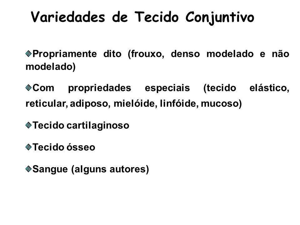 Variedades de Tecido Conjuntivo Propriamente dito (frouxo, denso modelado e não modelado) Com propriedades especiais (tecido elástico, reticular, adiposo, mielóide, linfóide, mucoso) Tecido cartilaginoso Tecido ósseo Sangue (alguns autores)